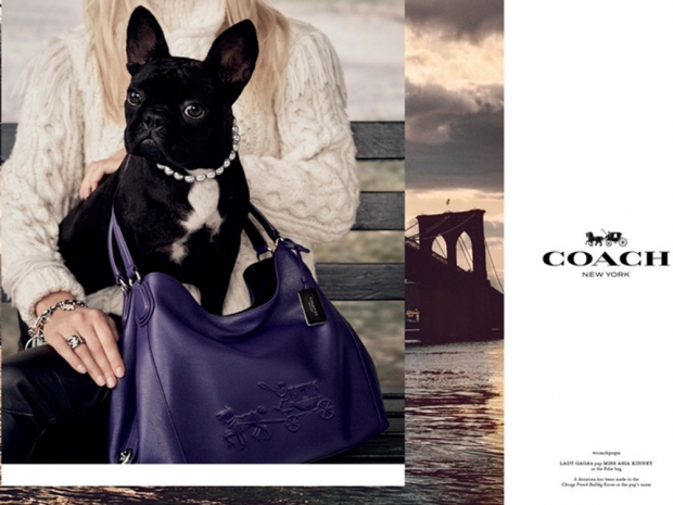 Coach's doggy campaign.
