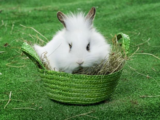 bunny spa