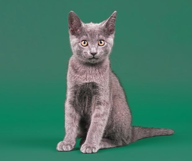 Can Cats Get Bipolar