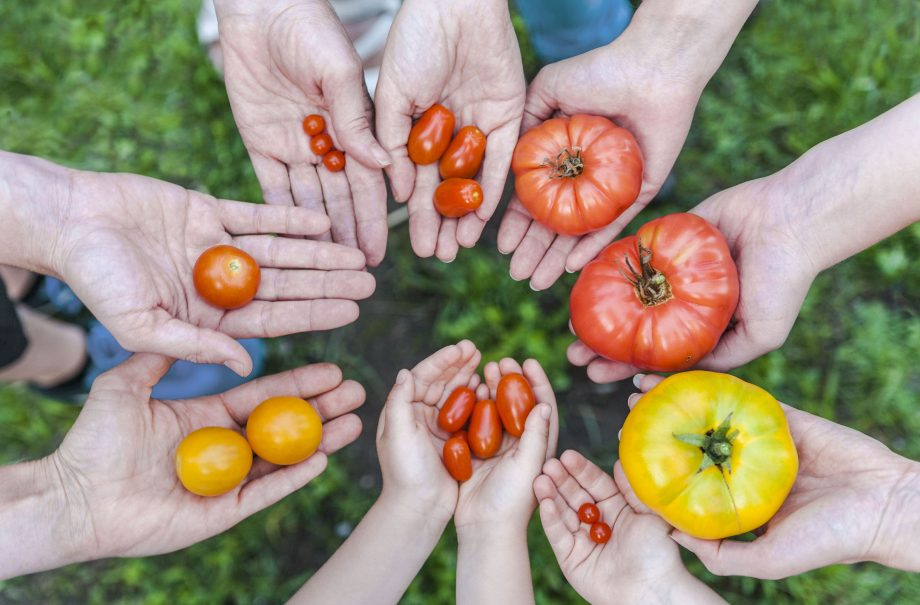 Here S How You Can Grow Your Own Fruit And Veg In