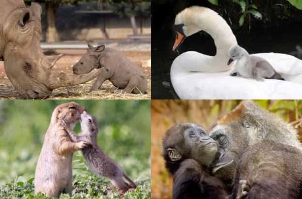 Mum and baby animals