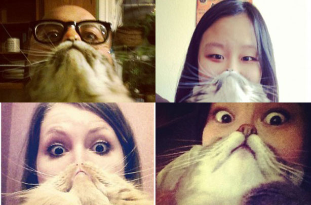 cat beards the purrrfect craze goodtoknow