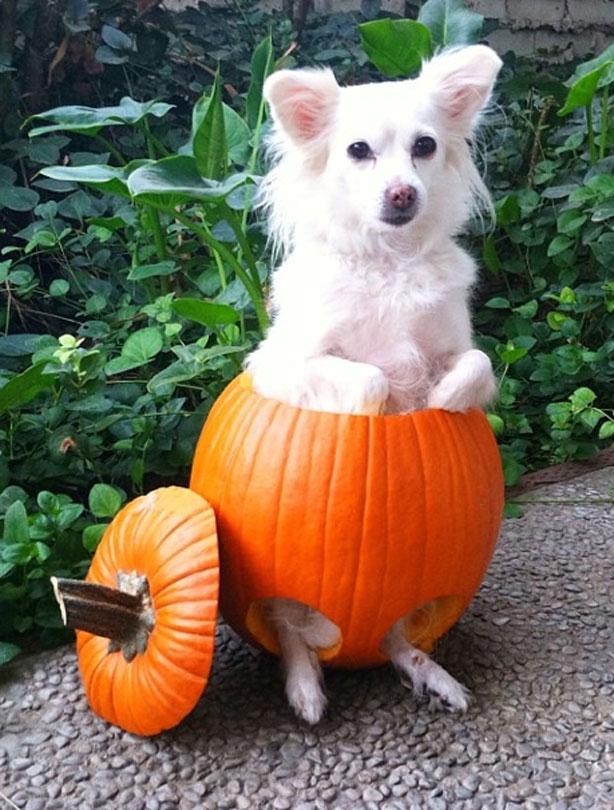 cute and funny halloween animal pics goodtoknow