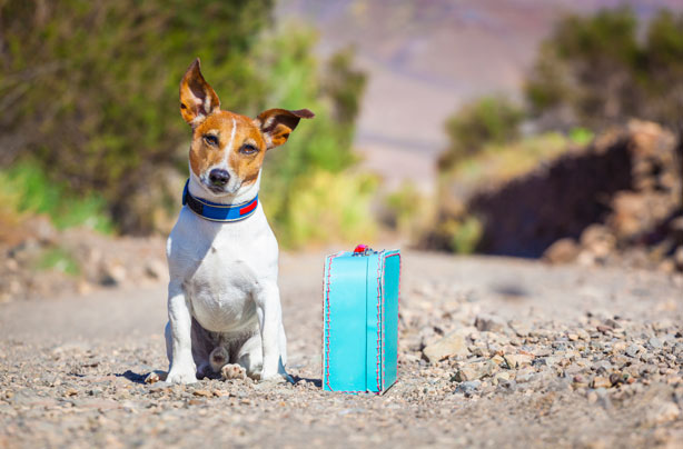 Dog-friendly holidays: hotels, campsites and holiday parks