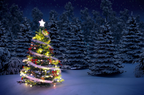 why do we have a christmas tree evergreen fir trees were first used by pagans who used branches to decorate their homes during the winter to celebrate the