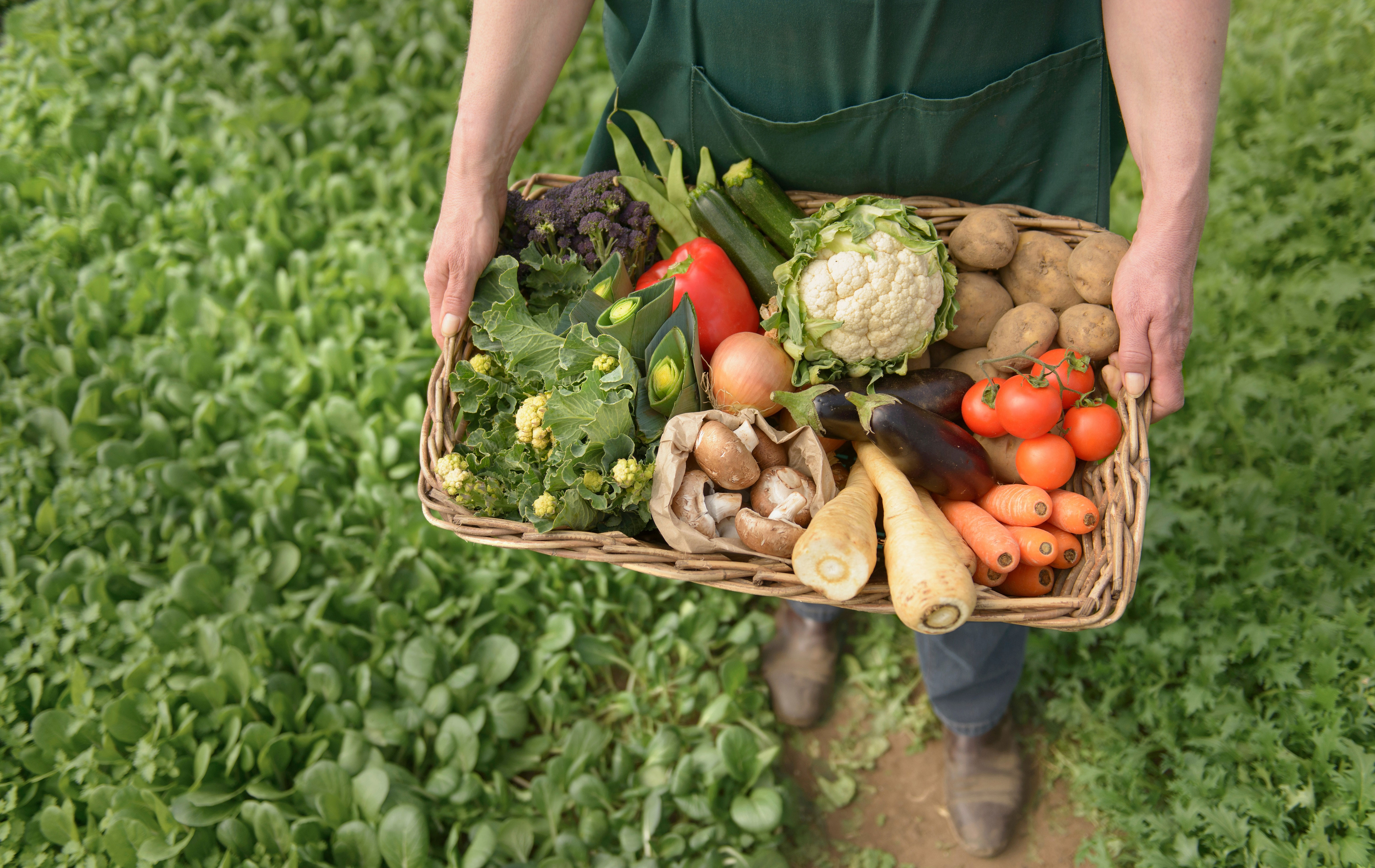 what is organic food and what does organic mean?