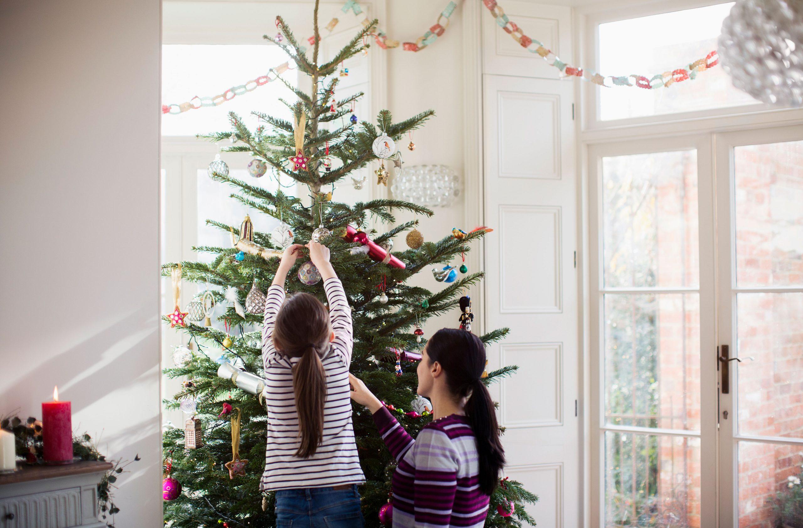 Lidl Christmas trees