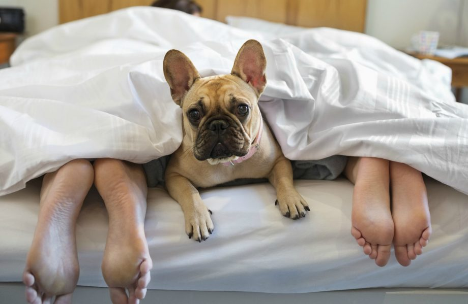 Letting your dog sleep on your bed could help you get a better night's rest