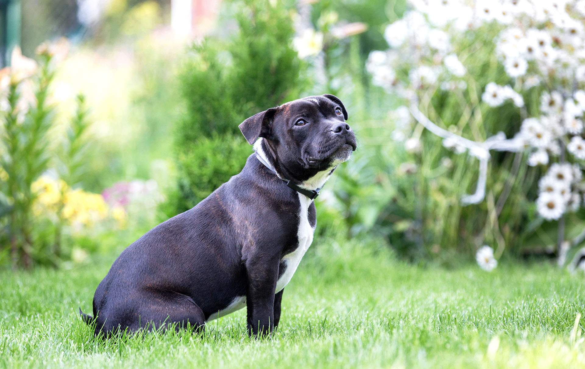 britain's favourite dog breeds top ten