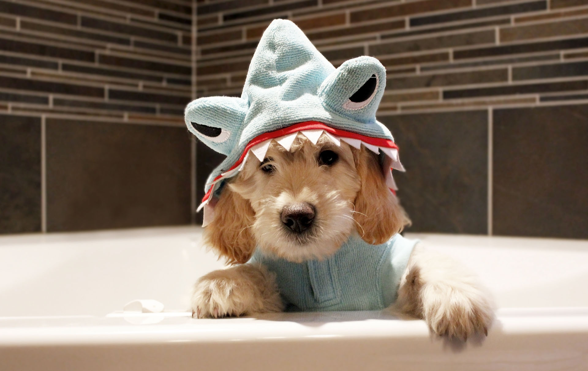 baby shark dog costume