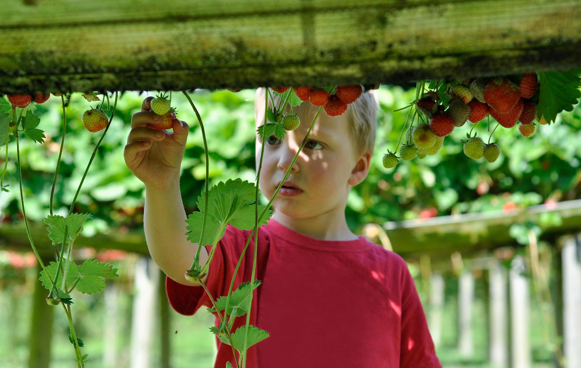 Fruit picking farms