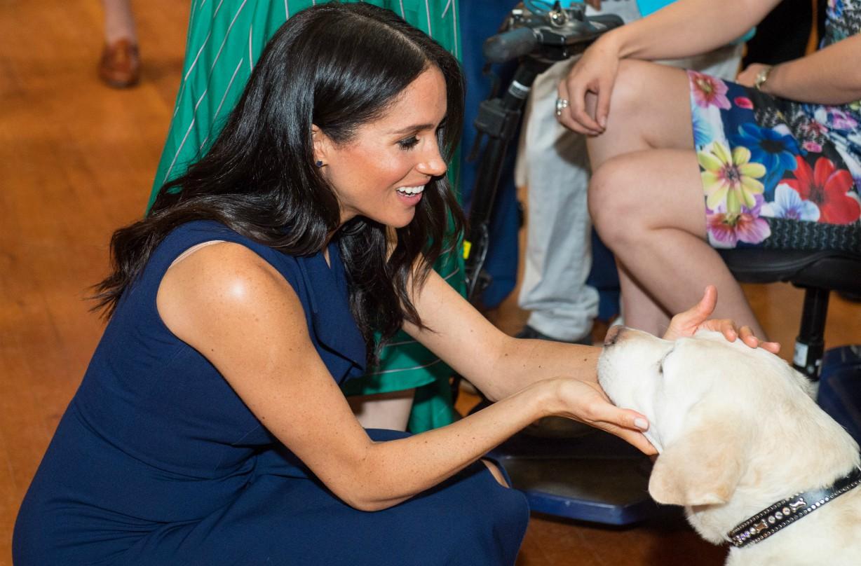 Meghan Markle adopt rescue pet archie