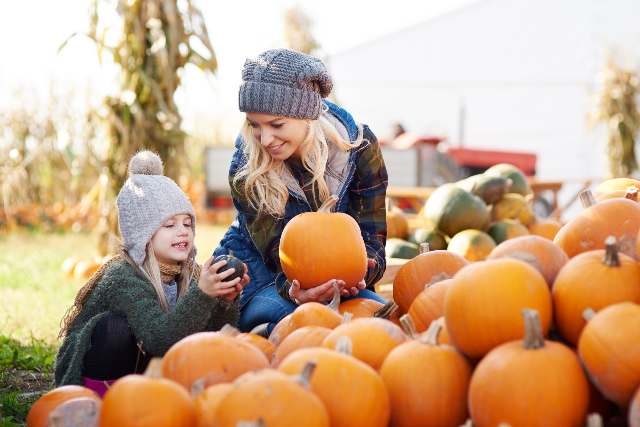 The best places to go pumpkin picking in the UK ahead of Halloween