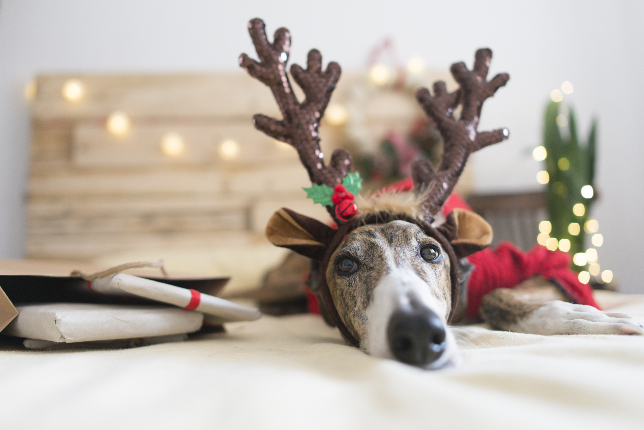 Our pick of the best Christmas outfits for dogs that will make your pooch look even more adorable