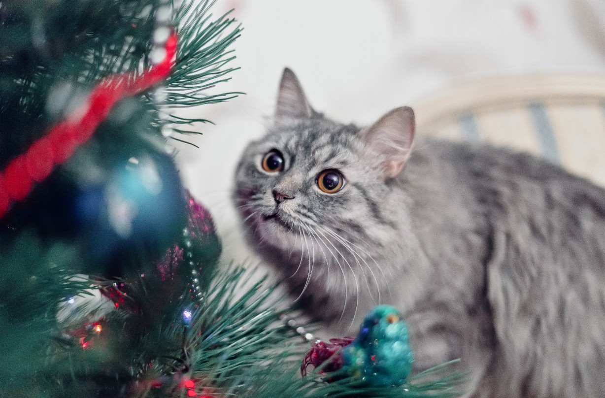 How to pet proof your Christmas tree