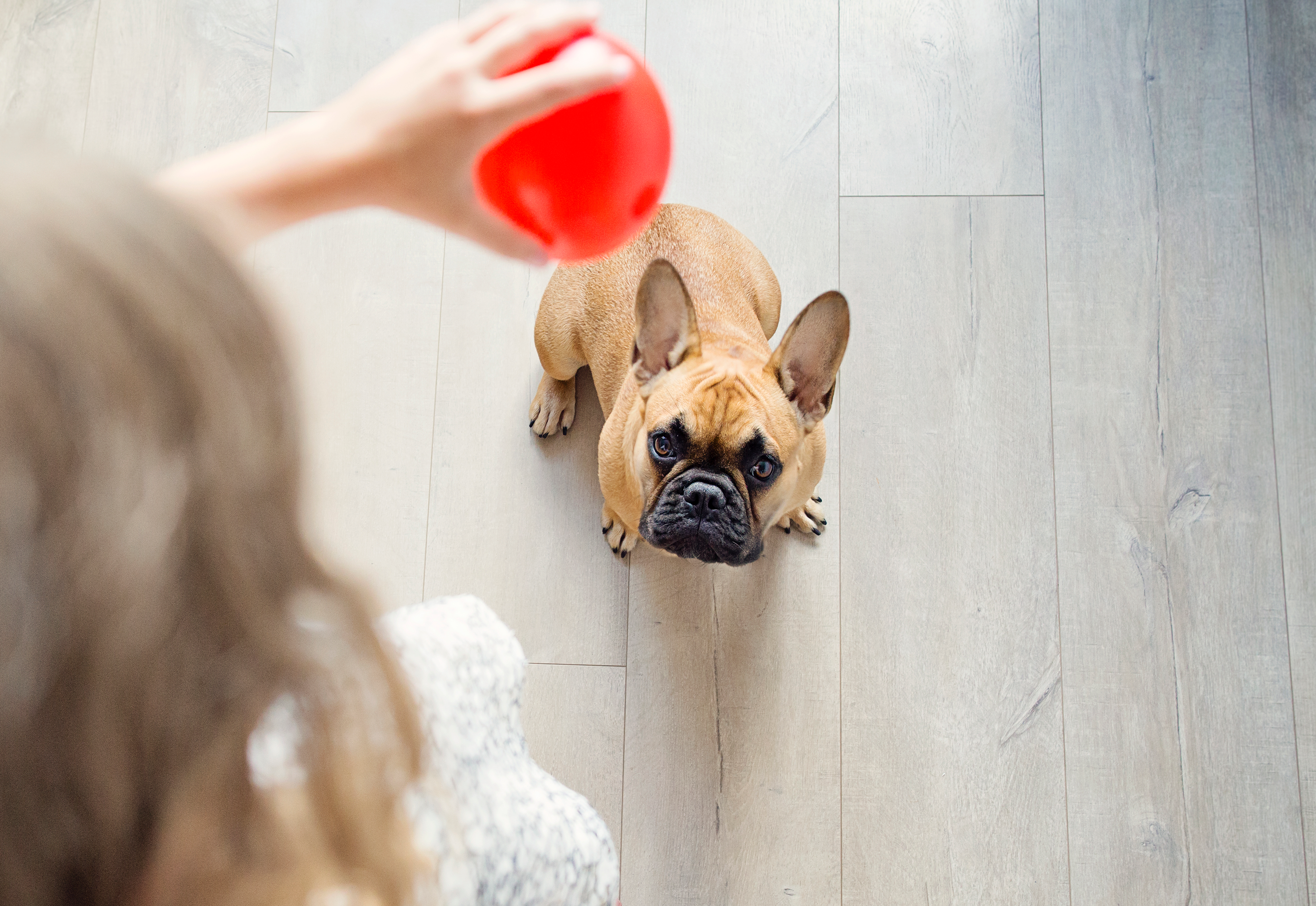 how to stop your pet putting on weight: tricks
