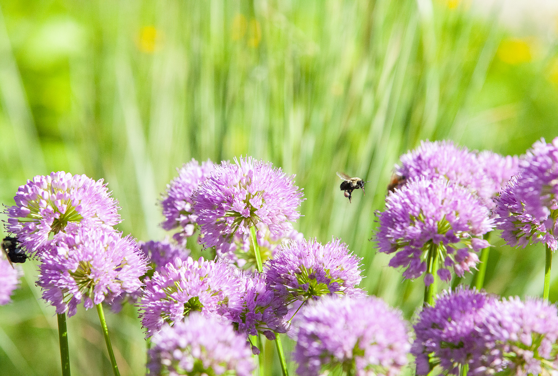 attract bees and butterflies
