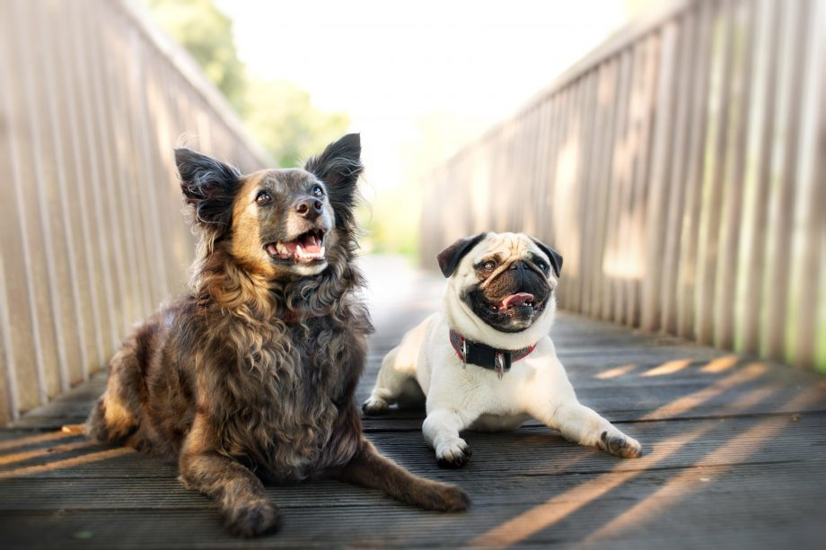 Two adorable dogs - pet laws