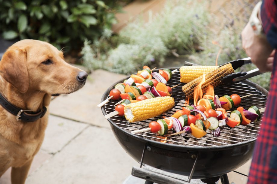 4 reasons you shouldn't let pets eat BBQ food: dogs are tempted