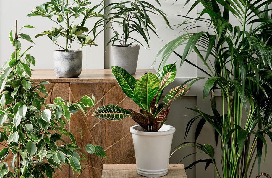 morrisons house plants