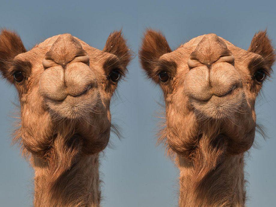 Real camel toe
