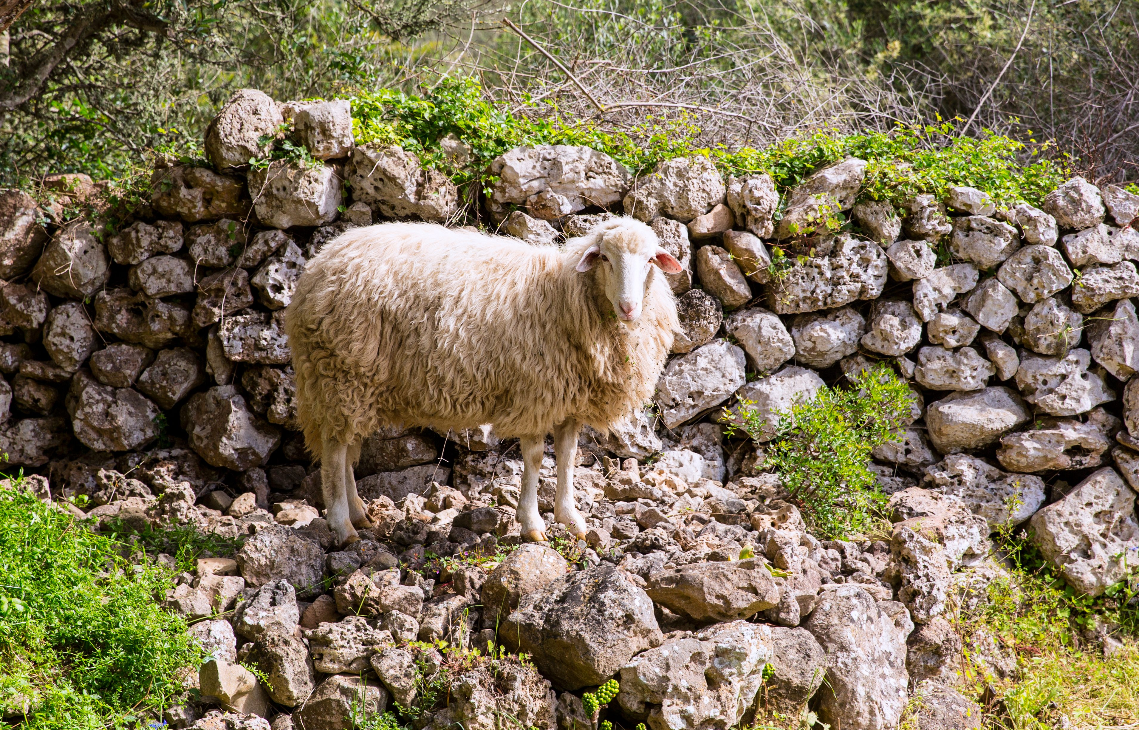 Fancy being a shepherd for the day? Try this new cruise experience