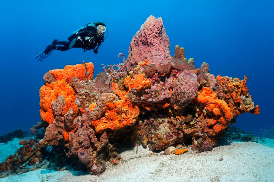 What to do in Tobago: scuba diving