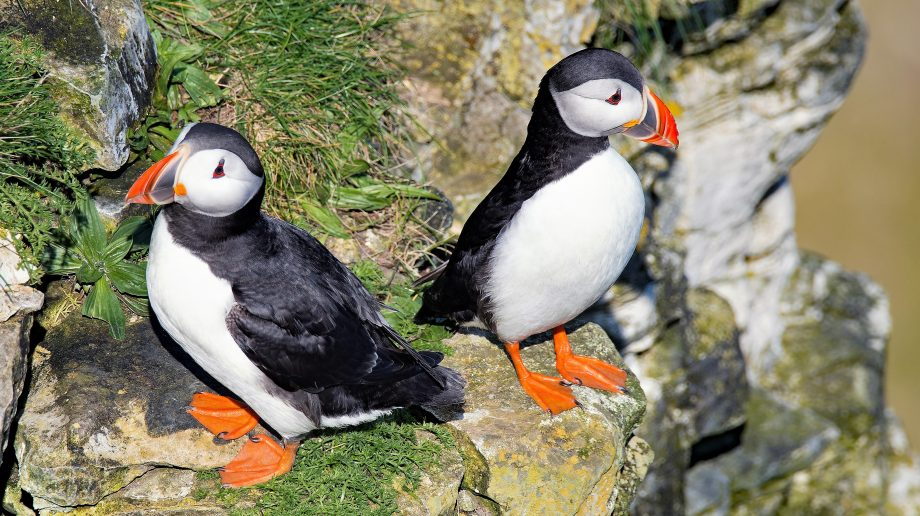 UK wildlife hotspots - Bridlington